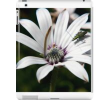 Osteospermum with insect iPad Case/Skin