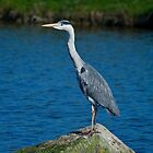 Stately Heron by John C. Murphy