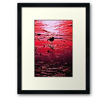 Sun bird Framed Print