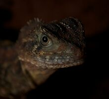 Eastern Water Dragon 1 by Zachary Golus