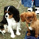 Rupert and Rowley at puppy school by BronReid