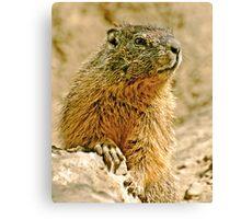 The Marmott Canvas Print