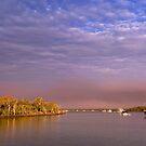 Tiger Mullet Twilight - Moreton Bay Qld Australia by Beth  Wode