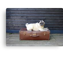 Big Personality, Small Package Canvas Print