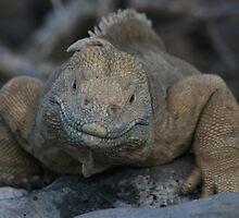 Juicy Lips, Galapagos Iguana by Jane McDougall