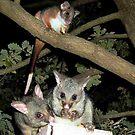 A rare concession made (Possum Magic) by BronReid