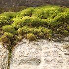 Miniature Landscape by ElyseFradkin
