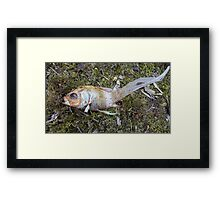 My goldfish has lost its color n°3 Framed Print
