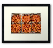 Italian apricots Framed Print
