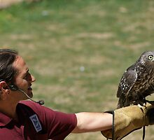 Barking Owl with handler, Healesville Sanctuary, Victoria by BronReid