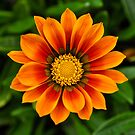 flower by gary roberts