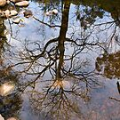Tree reflection by Pascal and Isabella Inard