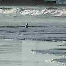 Seagulls playing chicken with Mooloolaba surf, Qld by BronReid
