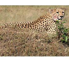 Cheetah - Masai Mara, Kenya Photographic Print