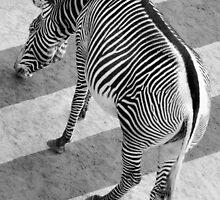 Stripes by jimmy hoffman