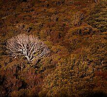 Tree, Mt Ruapehu by SteveJSharp