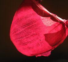 Red Onion Skin by Lozzie5243
