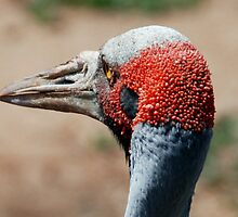 Do you think this my best side by Sherrill Meredith