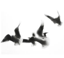 Wings of freedom by PhotomasWorld