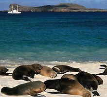 Beached Sea Lions by Jane McDougall