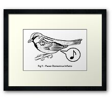 Passer Domesticus Inflatio Framed Print