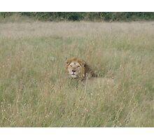 Male Lion - Masai Mara, Kenya Photographic Print