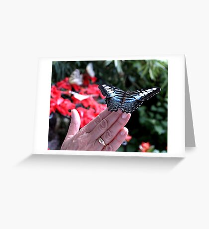 Penang Butterfly Garden Greeting Card