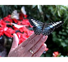 Penang Butterfly Garden Photographic Print