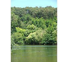Mt Lofty Botanic Gardens 2 Photographic Print
