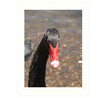 Black Swan (4566) Art Print