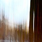 Winter Light by Lynn Wiles
