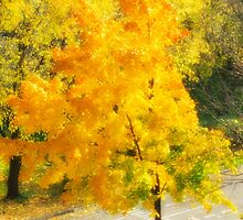Autumn colorful maple by igorsin