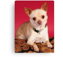 Cute in a small package Canvas Print