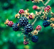 Blackberry picking by HoBo1921