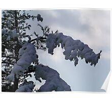 Snowy Needles Poster