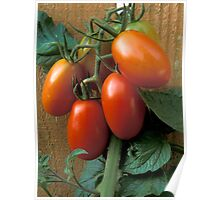 Tomatoes For You Poster
