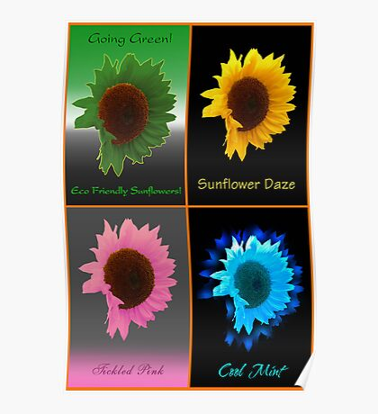 Four Way Sunflower Poster