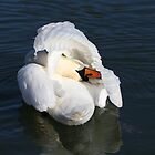 Swan by Norfolkimages