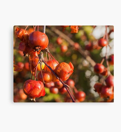Bad Fruit Canvas Print