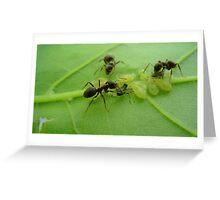 Ants of a Leaf. Greeting Card
