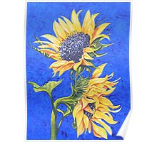 Sunflowers on Blue Poster