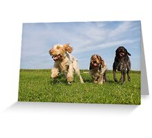 Orange & White, Brown Roan Italian Spinone Dogs & German Wirehaired Pointer Dogs Greeting Card