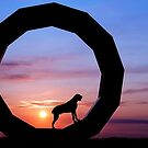 German Wiredhaired Pointer Dog Keltoi at Heavens Gate by heidiannemorris
