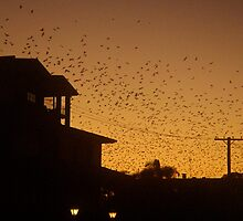 Bats at Dusk....(poem attached) by marieangel