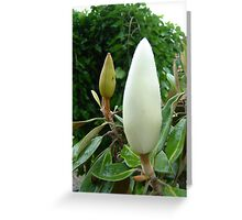 Buds with Bug Greeting Card