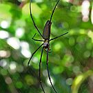 Golden Orb by FASImages