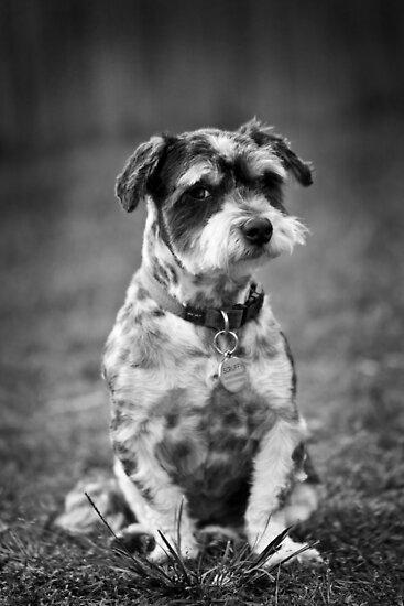 Scruffy the Dog by Adriana Glackin