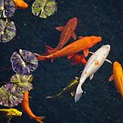 Koi Pond by Tina Blum