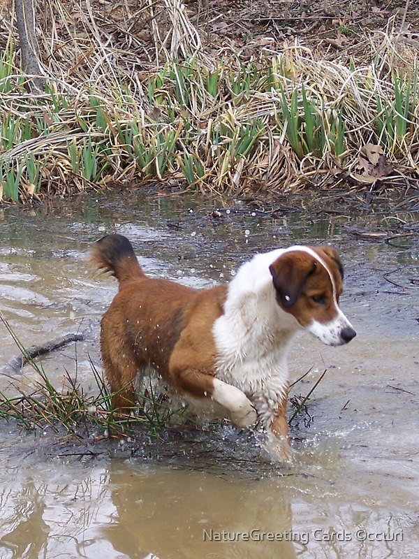 Buddy On A Frog Hunt by NatureGreeting Cards ©ccwri