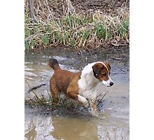Buddy On A Frog Hunt Photographic Print